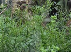 Animals cache-cache