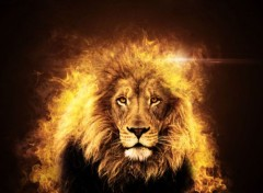 Animals Lion en Feu