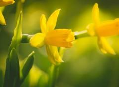 Nature Fleurs chaude d'hivers