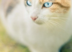 Animaux Blue Eyes
