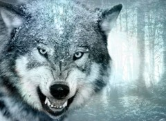 Animaux Loups Des Neiges