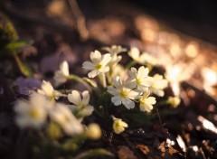 Nature L'arrivée du printemps