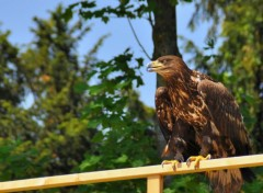 Animaux Rapace