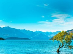 Nature Lac Wanaka