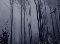 Nature De l'obscurité.