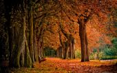 wallpaper Saisons - Automne (cat�gorie wallpapers Nature)