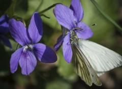 Animals Papillon sur une fleur