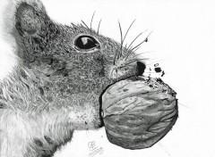 Art - Crayon Petit écureuil