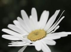 Nature les fleurs