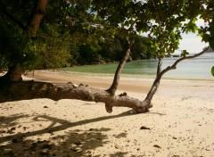 Nature Plage de Beauvallon (Mae, Seychelles)