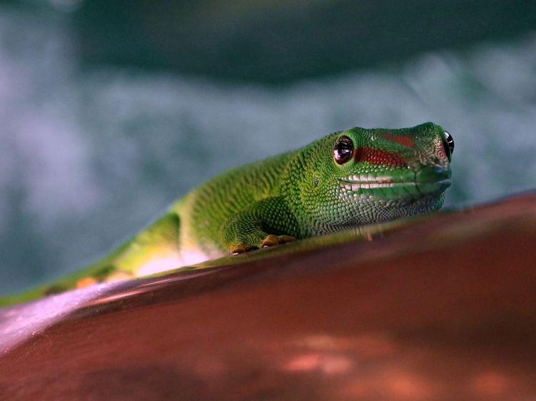Fonds d'écran Animaux Reptiles divers Wallpaper N°382350