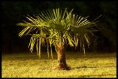 wallpaper Plantes - Arbustes (cat�gorie wallpapers Nature)