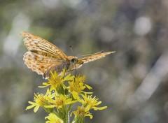 Animals Papillons d'automne