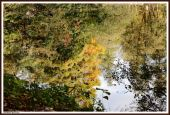wallpaper Eau - Reflets (cat�gorie wallpapers Nature)