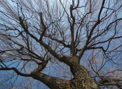 Nature Tronc de Saule pleureur en hiver