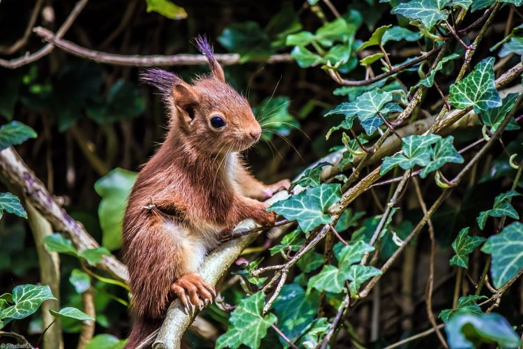 Wallpapers Animals Rodents - Squirrels Wallpaper N°402818