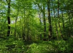 Nature Forêt de Cîteaux