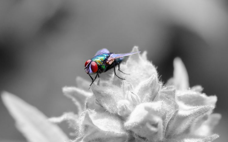 Wallpapers Animals Insects - Flies Wallpaper N°407585