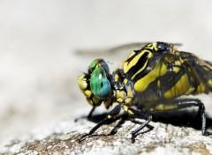 Animaux libellules