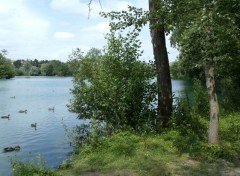 Nature Des arbres, un étang...