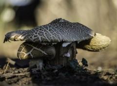 Nature champignons
