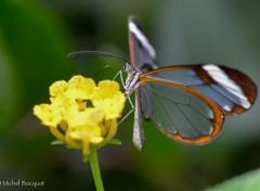 Animaux Papillon exotique