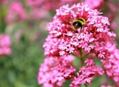 Animaux abeille et fleur
