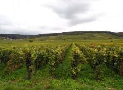 Nature Vignoble bourguignon