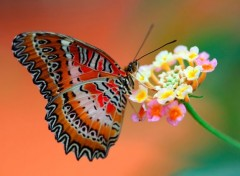 Animaux beauty-butterfly-flower