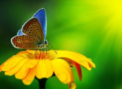 Animaux blue-butterfly