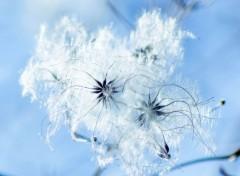Nature graine d'hiver