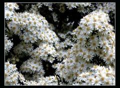 Nature Exubérance florale