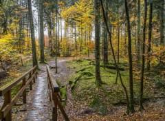 Nature forêt de lorraine