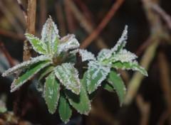 Nature gelée d'hiver