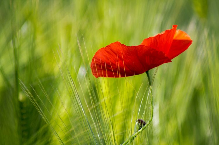 Fonds d'écran Nature Fleurs Wallpaper N°447805