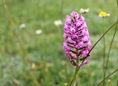 Nature orchidées