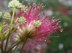 Nature rosée du matin