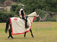 Animaux spectacle equestre