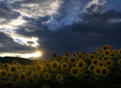 Nature Le soir avant la tempête