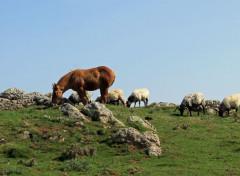 Animals chevaux en liberté