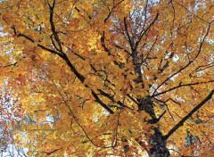 Nature L'automne