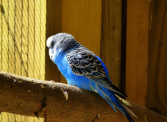 Animals Oiseaux
