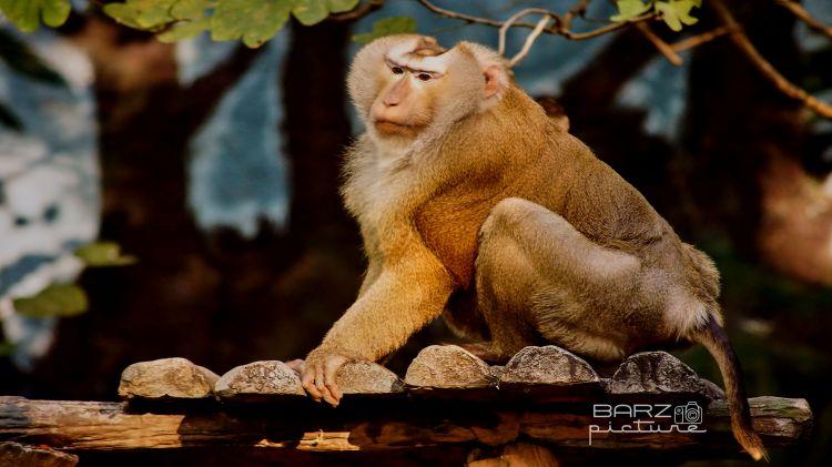 Wallpapers Animals Monkeys Wallpaper N°459676