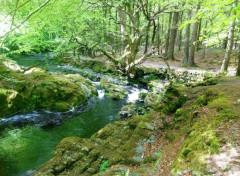 Nature C'est déjà bien vert !!!