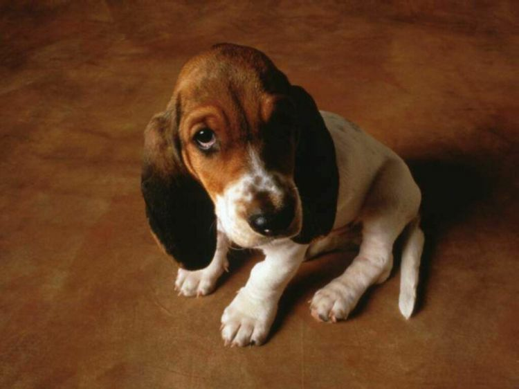 Wallpapers Animals Dogs Wallpaper N°38698