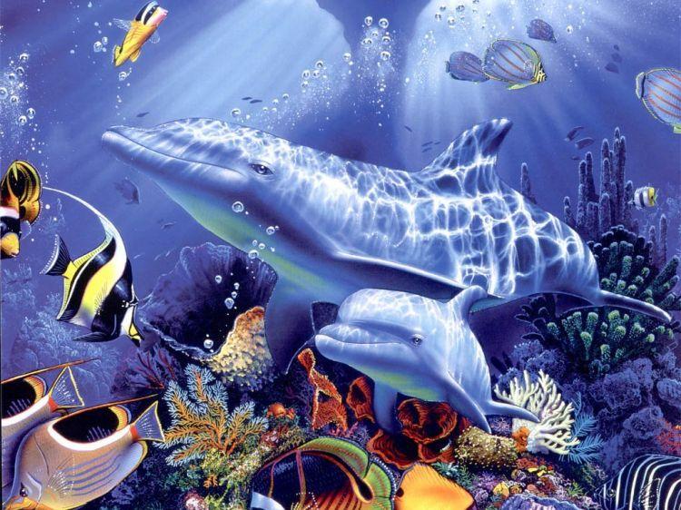 Fonds d'écran Animaux Vie marine - Dauphins Wallpaper N°38737
