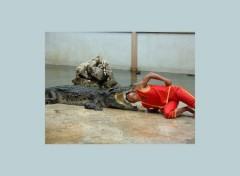 Fonds d'écran Animaux Crocodile