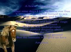 Fonds d'écran Animaux A horse with no name