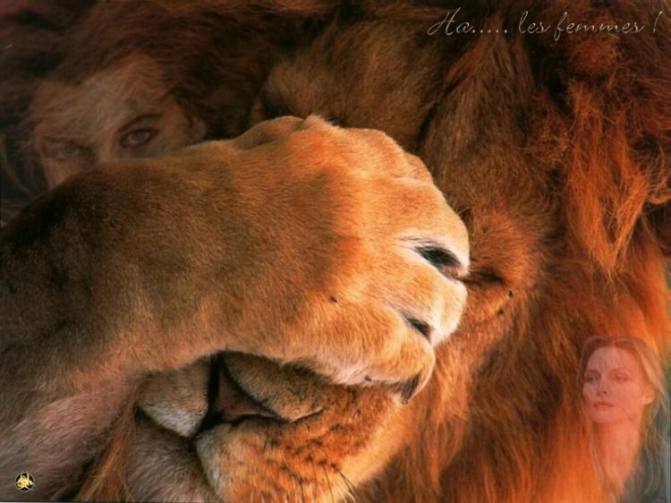 Fonds Décran Animaux Fonds Décran Félins Lions Ha