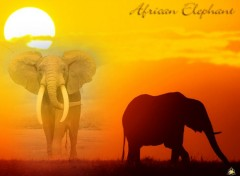 Wallpapers Animals African Elephant